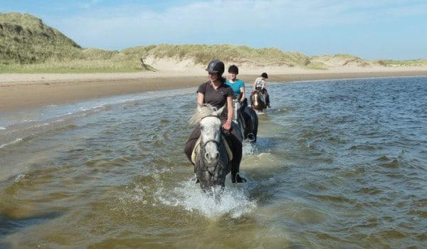 Horses in Erne Estuary