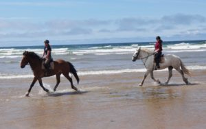 Two horses trotting on Tullan Strand